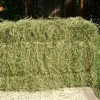 La alfalfa sembró un mojón en la historia agrícola