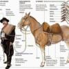 Similitudes, Semejanzas y Diferencias entre los Gauchos y Cow-Boys